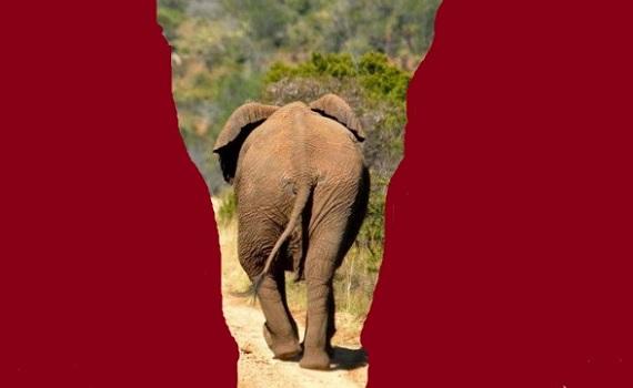 słoń wąwóz